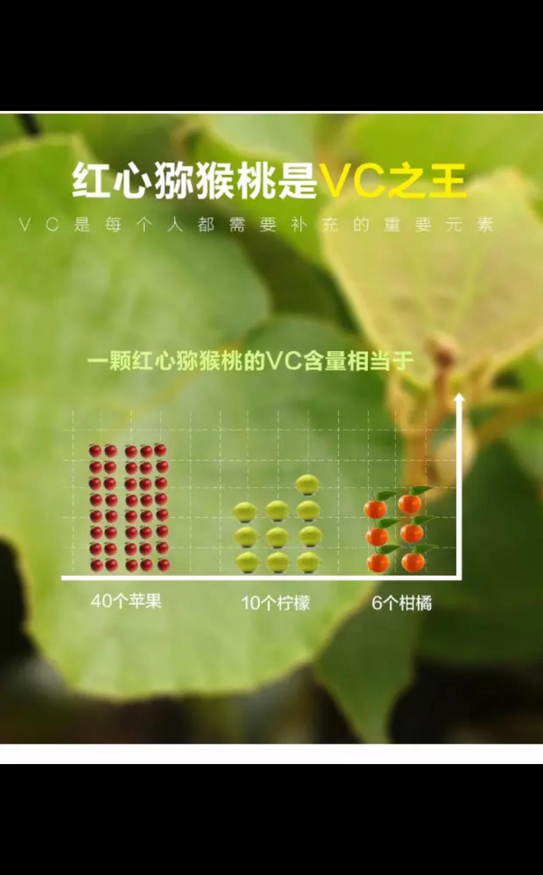 蒲江红心猕猴桃5斤包邮(2016年已售罄)